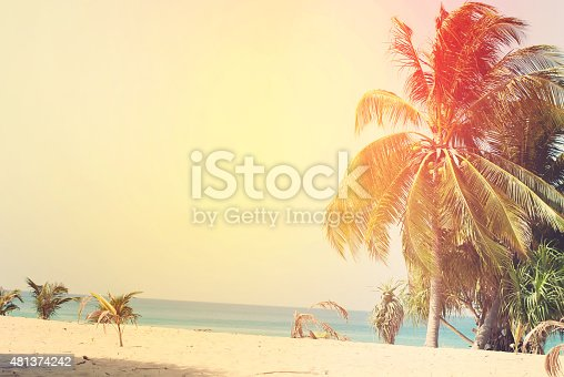 Desert Beach with Palm Trees lit by the Sun. Tropical Background Toned under Retro. Holiday Card