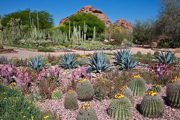 Desert Botanical Gardens stock photo