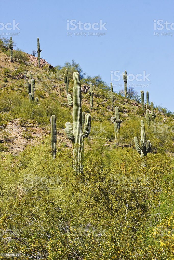 Desert cactus and other plants royalty-free stock photo