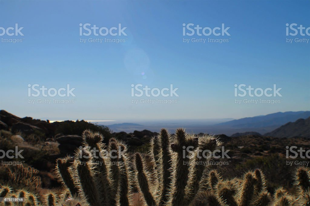 Desert Cactus Landscape stock photo