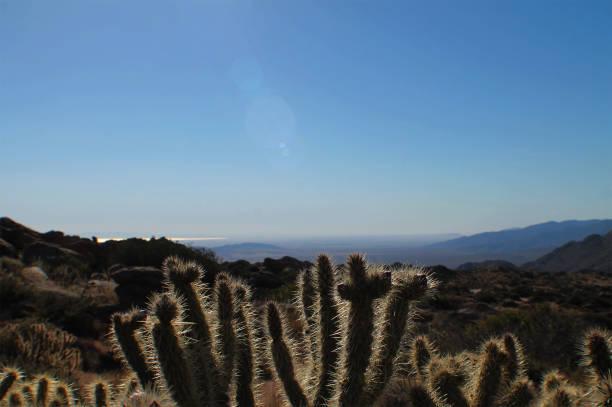 Desert Cactus Landscape stock photo