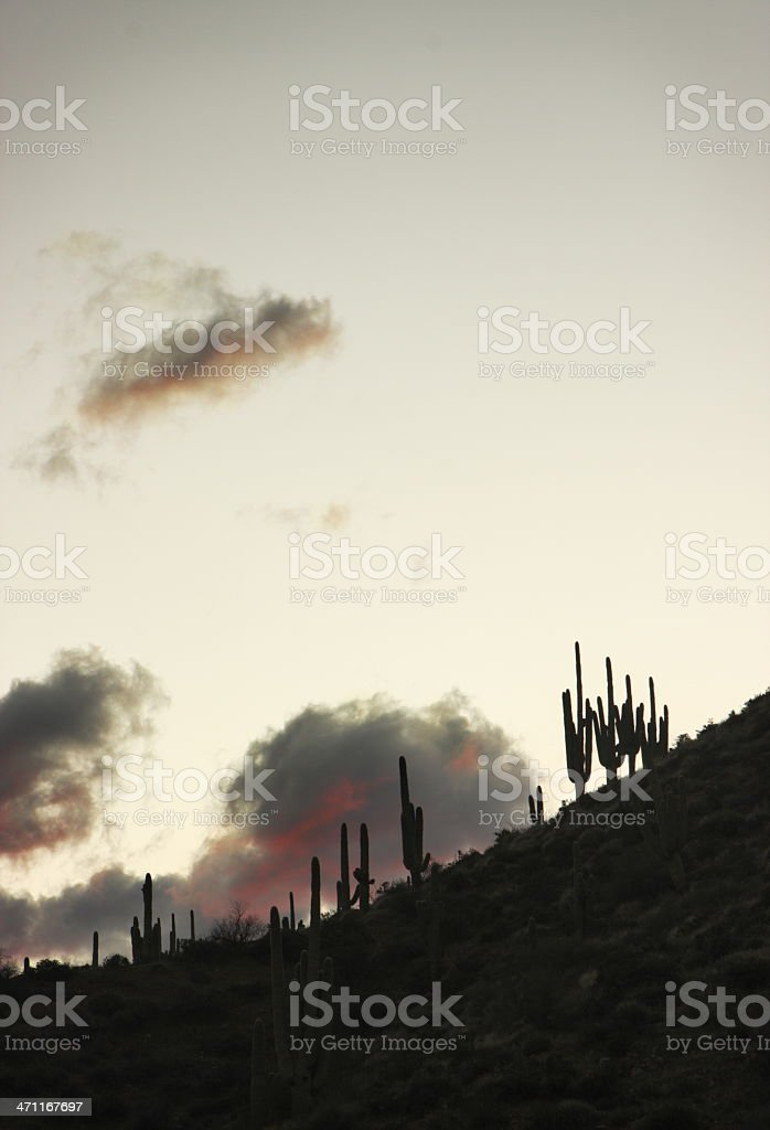 Desert Cactus Sunset Silhouette royalty-free stock photo