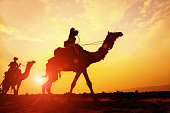 Caravan of camels on their way through the desert at sunset. Desert of Rajasthan, Pushkar, India.