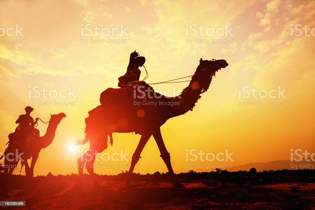 Desert Camel Caravan Silhouette at Sunset stock photo