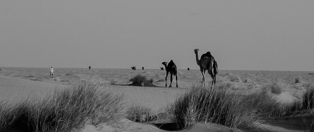 Sahara desert dunes and mountains at dusk