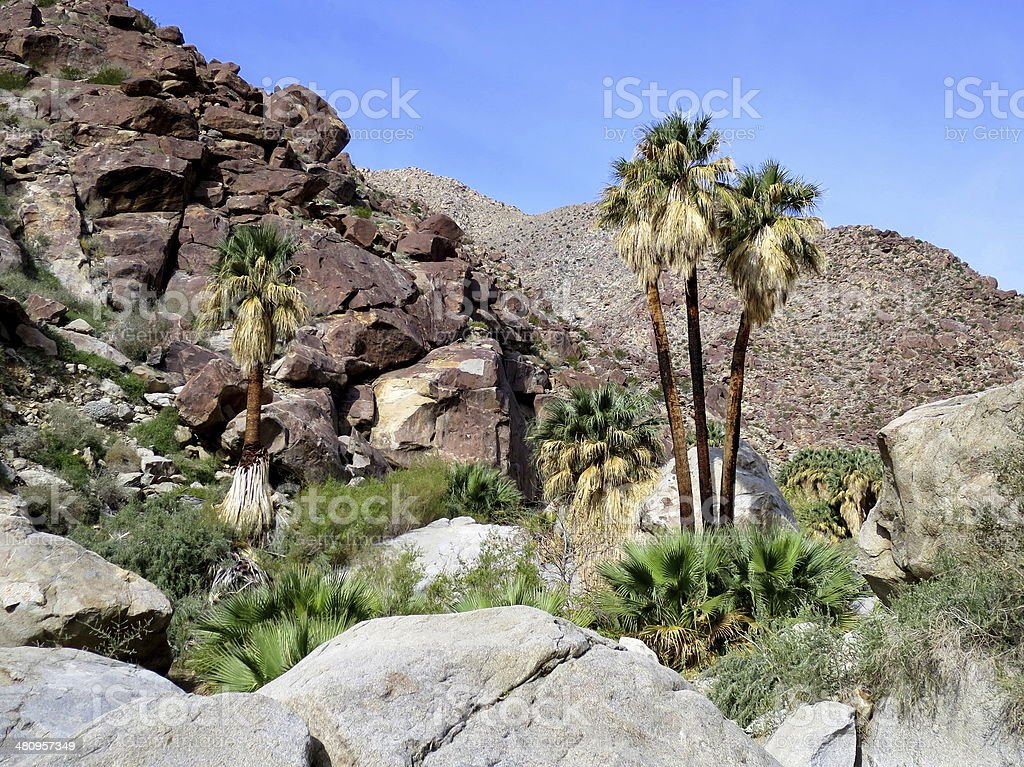 Desert Canyon with Palm Trees stock photo