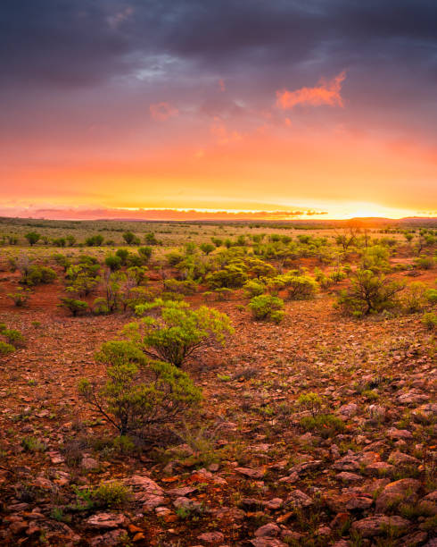 Desert Colour Alice Springs, Australia outback stock pictures, royalty-free photos & images