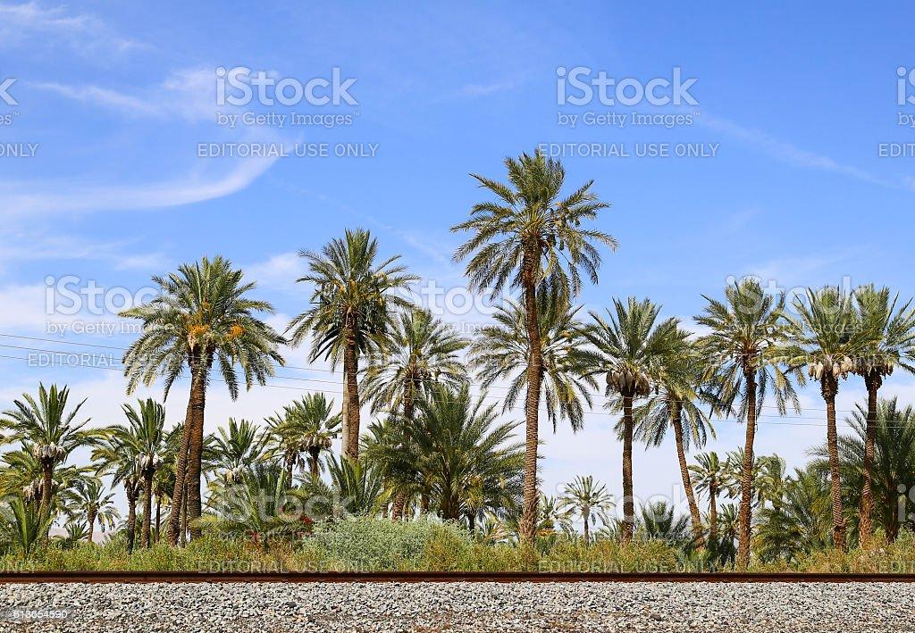 Desert Date Farm stock photo