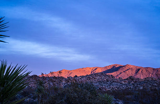 Desert Dawn stock photo