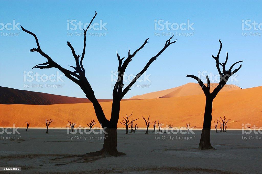 Desert Dawn Silhouettes stock photo