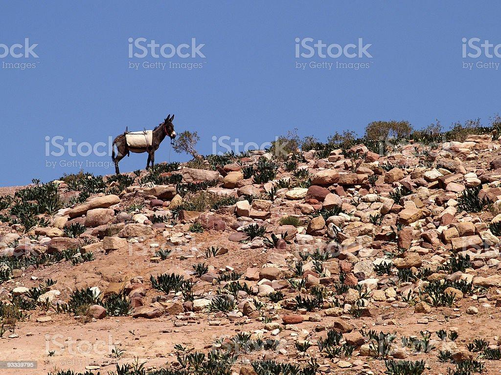Desert Donkey royalty-free stock photo
