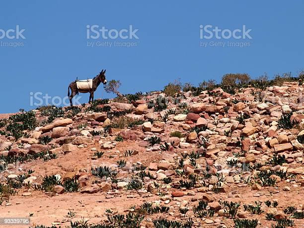 Desert Donkey