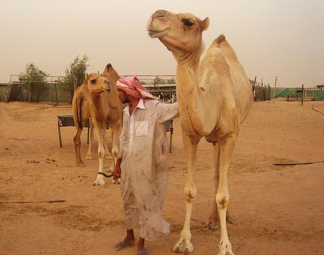 Desert tours in Dubai, UAE