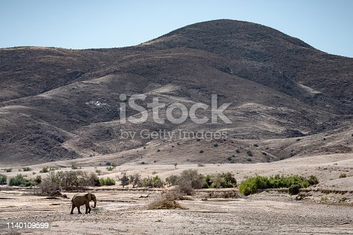 Desert Elephant in the Hoarusib River, Namibia.