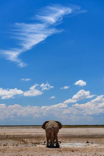 Wüstenelefant Rückansicht – Foto