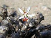 Flowers in the Namib desert.