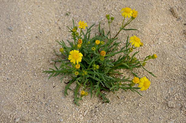 Desert Flower – Foto