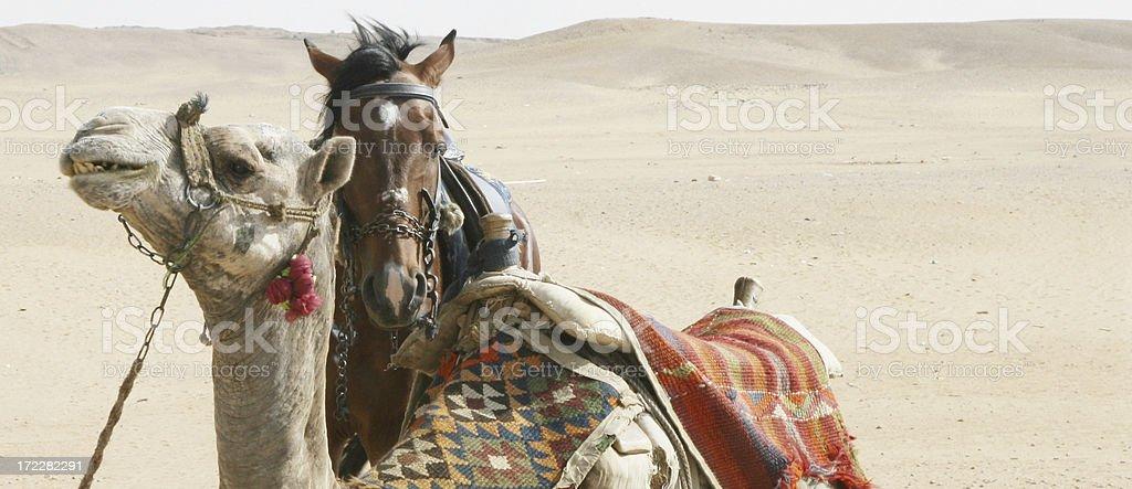 Desert Friends royalty-free stock photo