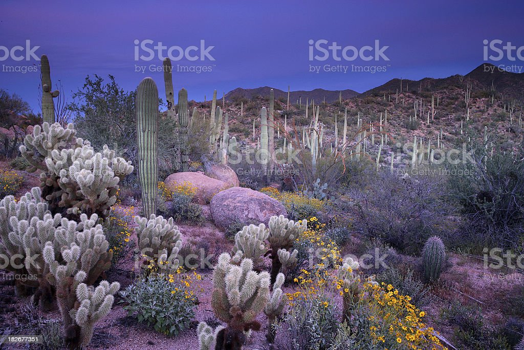 Desert Garden stock photo
