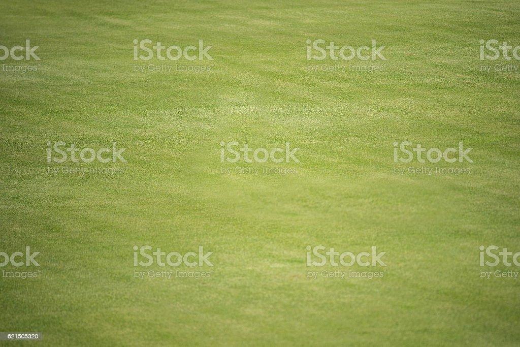 desert golf course green foto stock royalty-free