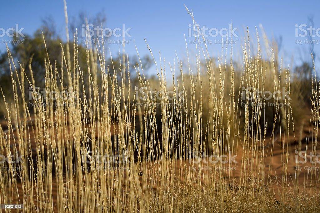 Desert Grass Close-up royalty-free stock photo