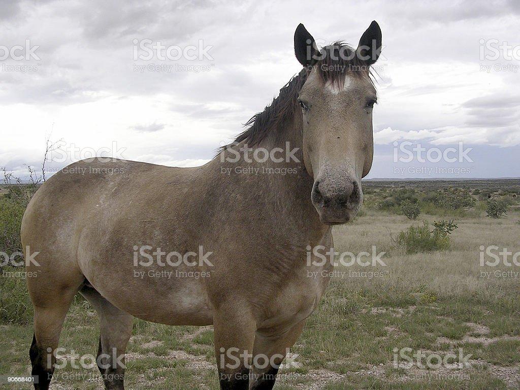 Desert Horse royalty-free stock photo