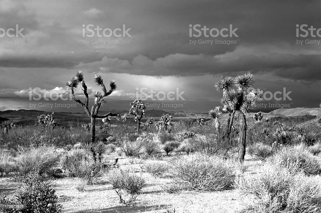 Desert in Black and White stock photo