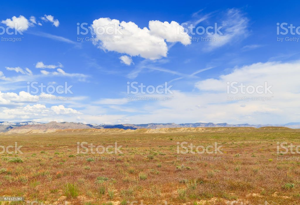 Desert in Bloom royalty-free stock photo