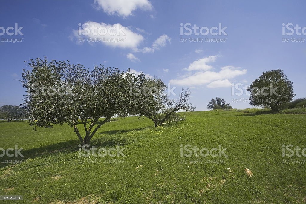 Desert in blossom-time royalty-free stock photo