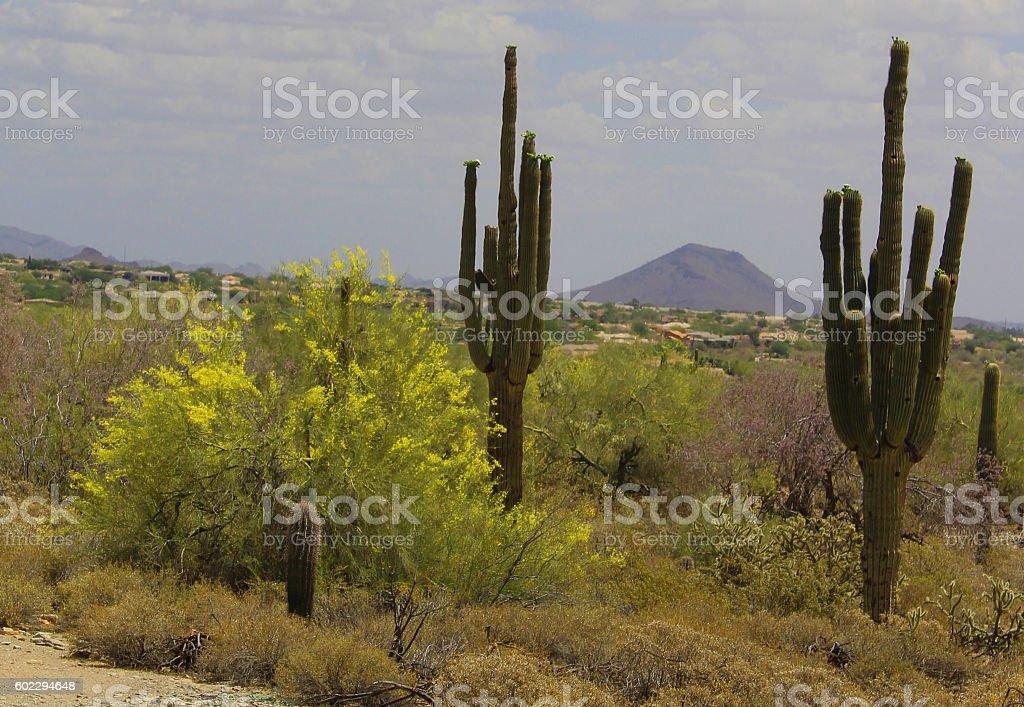 Desert in flower stock photo
