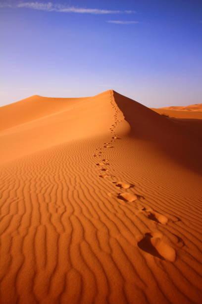 wüste in sahara in marokko - sahara stock-fotos und bilder