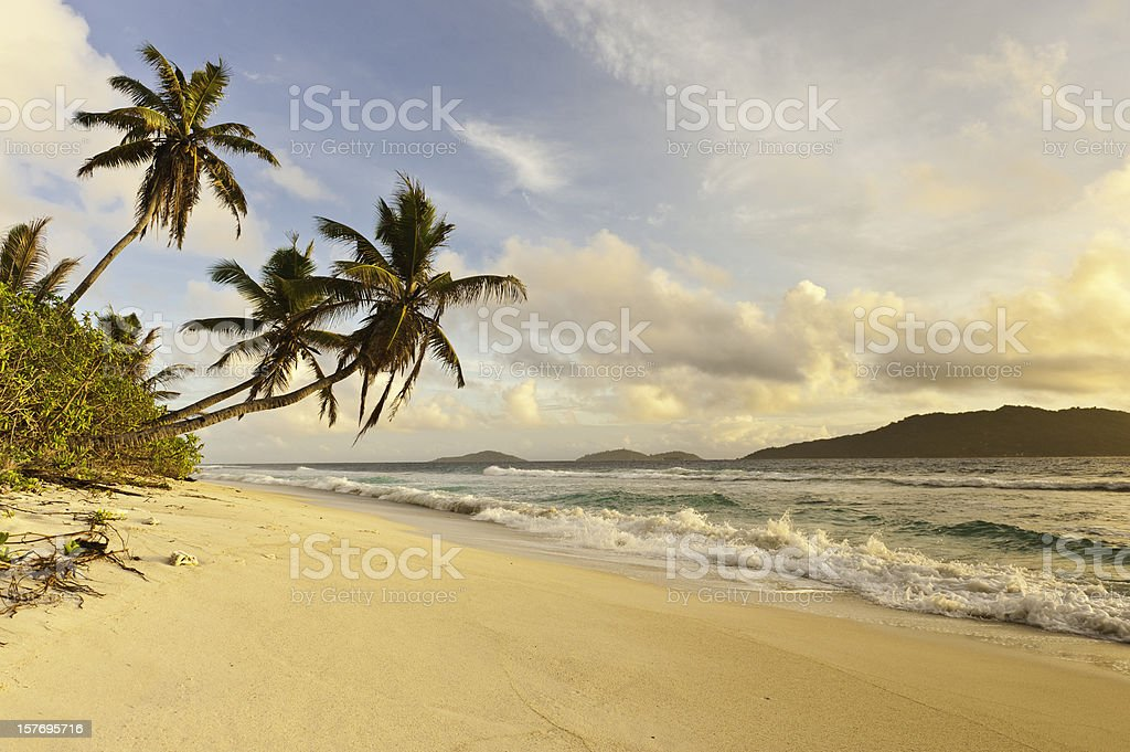 Desert island sunrise idyllic palm trees golden sand tropical beach royalty-free stock photo