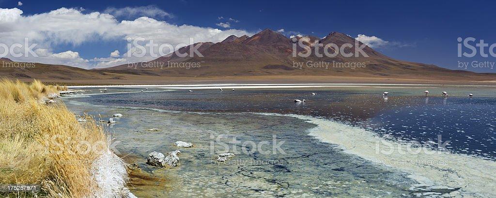 Desert lake Laguna Canapa, Altiplano, Bolivia on a sunny day royalty-free stock photo