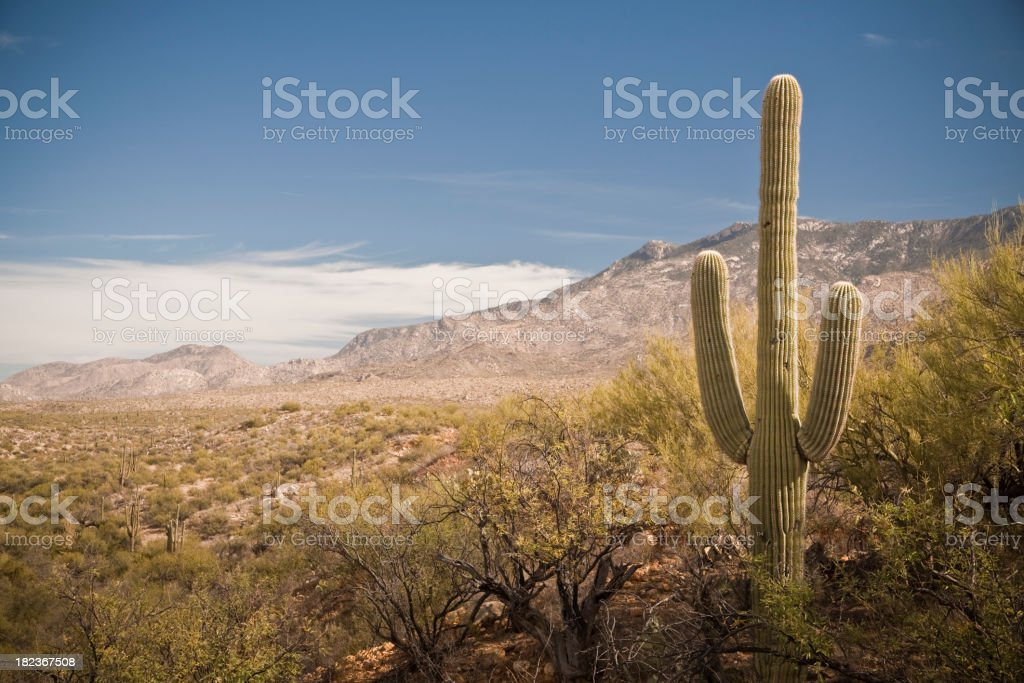 Desert Landscape - 1 cactus with mountains royalty-free stock photo