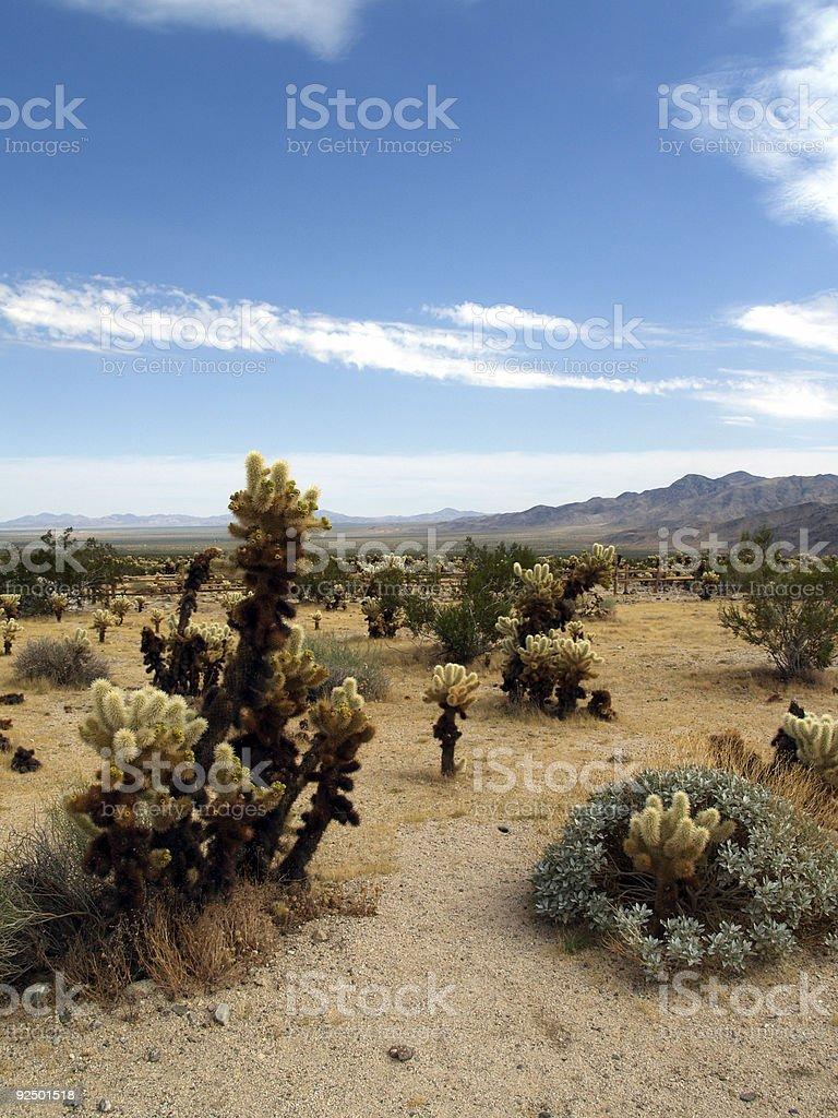 Desert Landscape 2 - Joshua Tree royalty-free stock photo