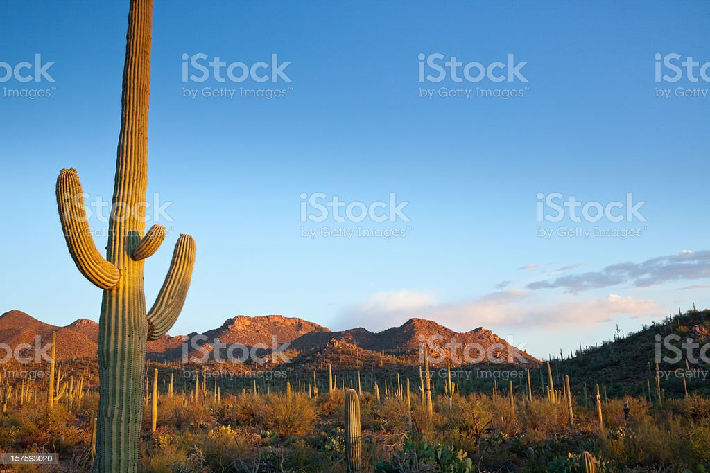 Desert landscape filled with cactuses in the sun stock photo