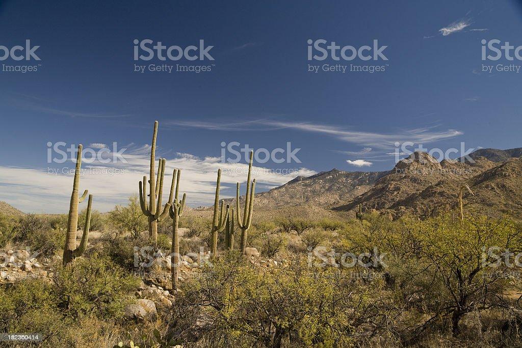 Desert Landscape - Group of Cactus royalty-free stock photo