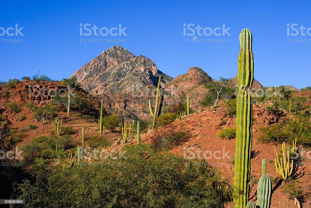 Desert landscape in Baja California stock photo
