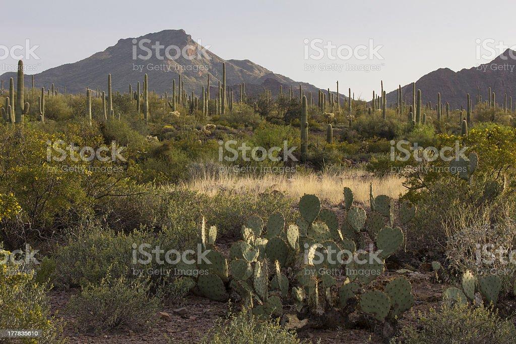 Desert Landscape in Evening Light royalty-free stock photo