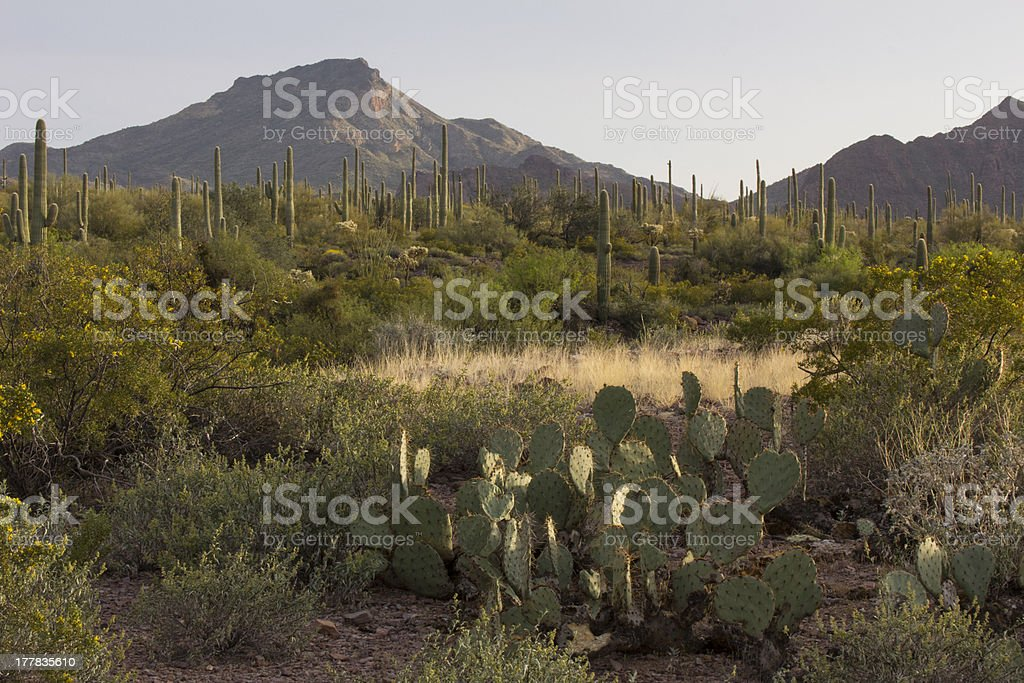 Desert Landscape in Evening Light stock photo