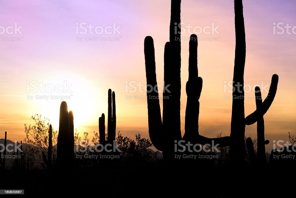 Desert landscape in sunset royalty-free stock photo