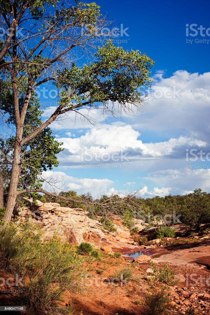Desert Landscape of Cedar Mesa in Bears Ears National Monument stock photo
