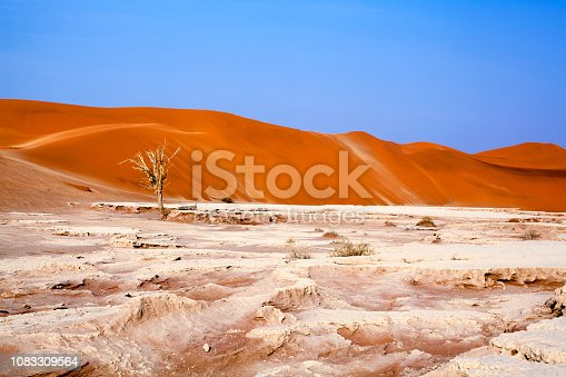 1083309578 istock photo Desert landscape with orange dunes and one dead dry tree on white dried clay land on bright blue sky background, Naukluft National Park Namib Desert, Namibia, Southern Africa 1083309564