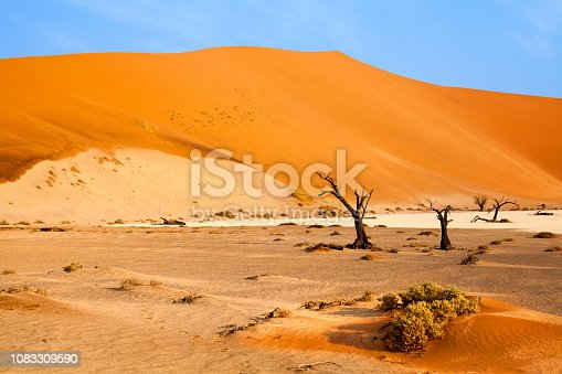 1083309578 istock photo Desert landscape with orange sand dunes and dead dry trees on bright blue sky background, Naukluft National Park Namib Desert, Namibia, Southern Africa 1083309590