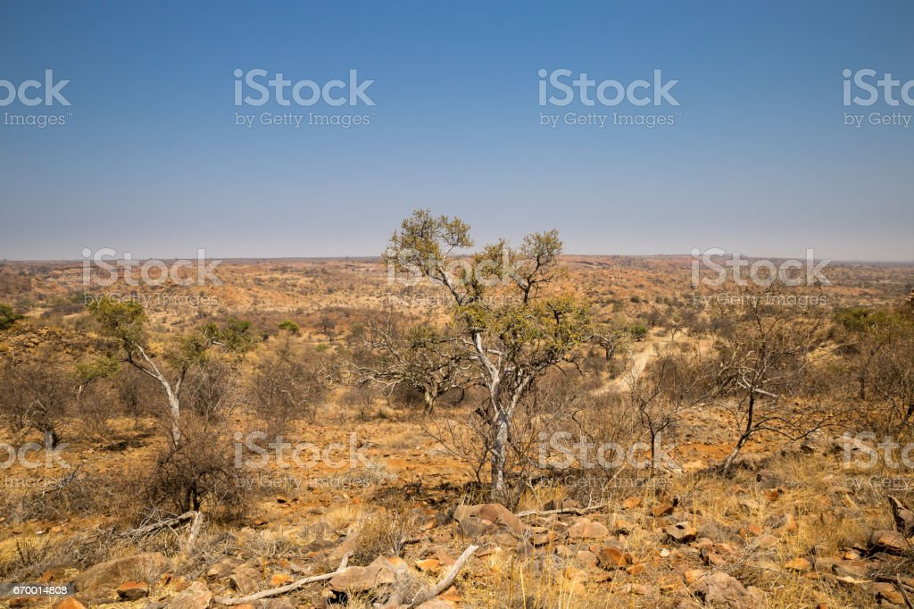 Desert Landscape with Trees in Mapungubwe National Park, South Africa stock photo