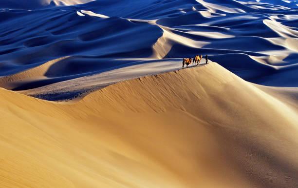 wüstenlandschaft mit walking kamele bei sonnenaufgang - urlaub in tunesien stock-fotos und bilder