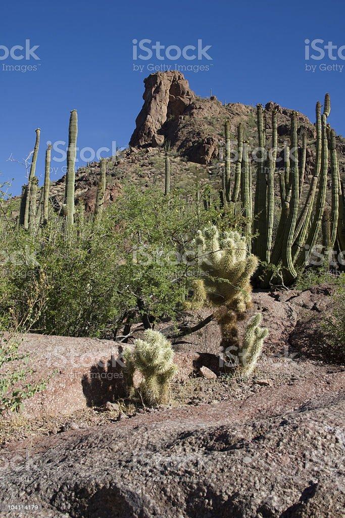 Desert Morning Light royalty-free stock photo