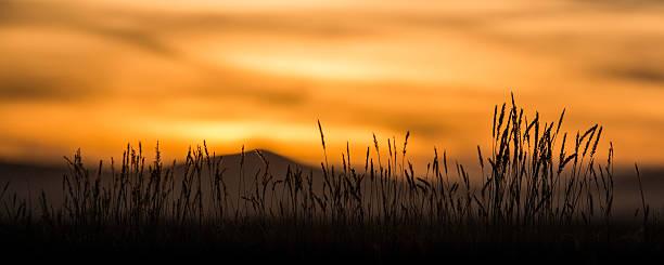 Desert Mountain Wheat Panorama at Sunset stock photo