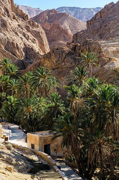Desierto, las montañas, palmeras y una casa - foto de stock