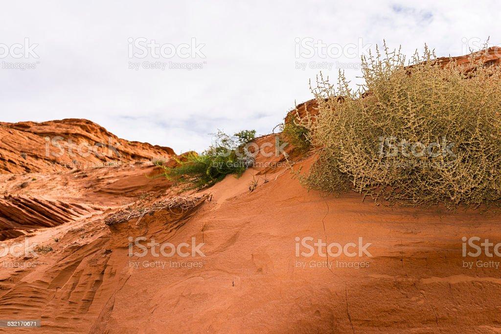 Desert near Antelope Canyon (Lake Powell Navajo Tribal Park, Arizona) stock photo